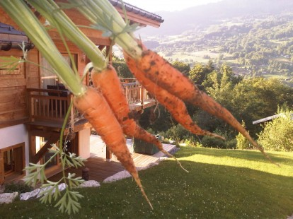Carrots from the Chalet APASSION Veg Patch