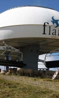 Sheep at Grands Vans Lift, Samoëns, France